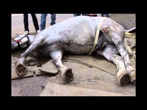 Городской прокат лошадей ( Покатушки)