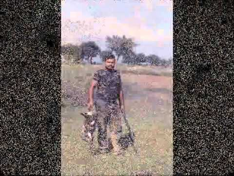 Duck Hunting Pakisan Russion Dove