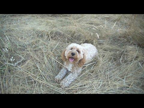 Sunny Summer Day Dog Vlog