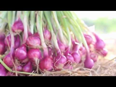 แปลงผักหอมV. 1|ฟาร์มนอกกะลา