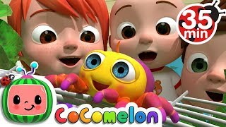 Itsy Bitsy Spider | +More Nursery Rhymes - Cocomelon (ABCkidTV)