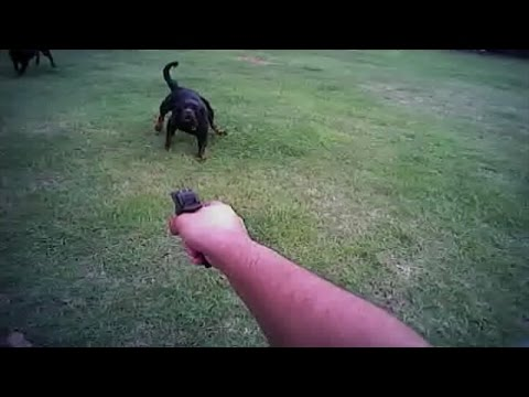 Body camera records Florida deputy shooting resident's dog