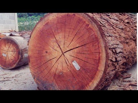 Clique e veja o vídeo Curso Secagem e Tratamento de Madeira na Fazenda