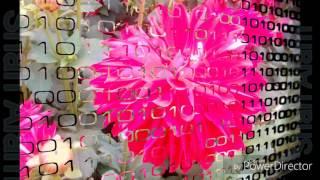 যাদের ভালবাসার মানুষ অভিমান করেছে তাদের জন্য | লক্ষী সোনা রাগ করনা, একটু হাসো প্লিস।