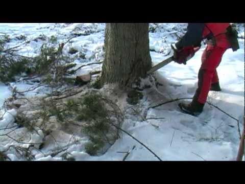 Husqvarna Chainsaw Cutting Down A Big Tree 2013.mpg video