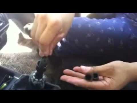 tutorial como cambiar la perilla de volocidadez