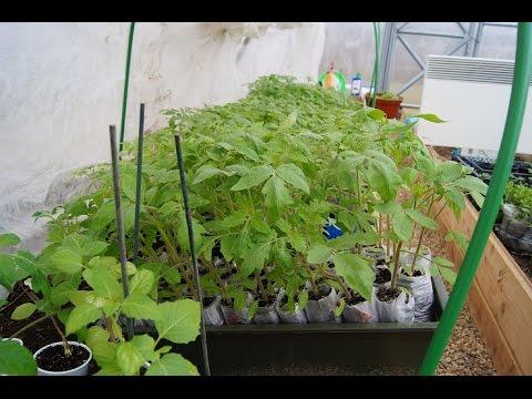Парник для рассады томатов 126