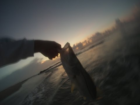 Snook fishing from the beach!!!! When and where you can catch big snook