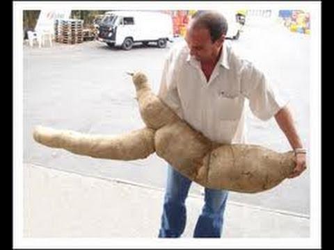 Homem é internado com mandioca enfiada no ânus