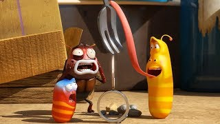 LARVA - BALANCE | Cartoon Movie | Cartoons For Children | Larva Cartoon | LARVA Official