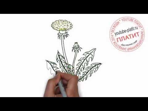 Видео как нарисовать одуванчик карандашом