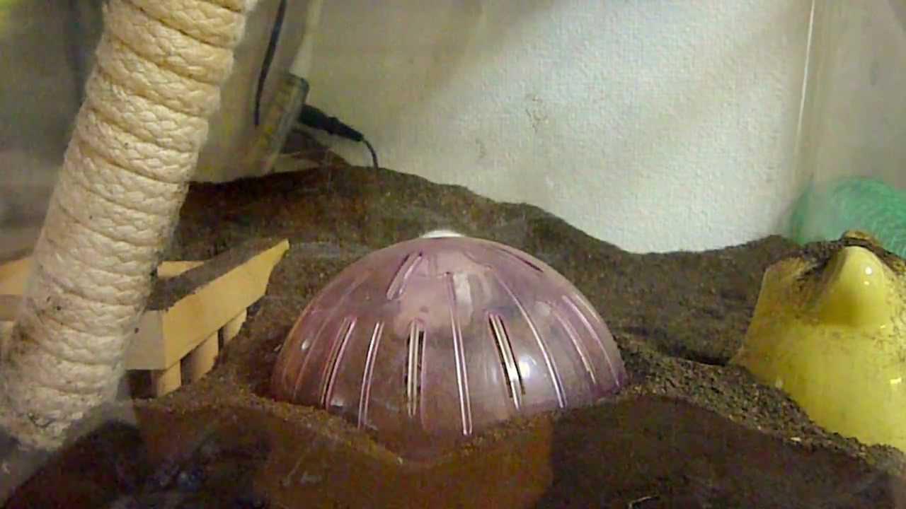 ハツカネズミの画像 p1_37