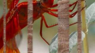 Watch Fernando Ortega Dragonfly video