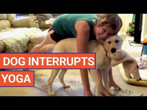 Dog Wants To Do Yoga | Daily Heart Beat
