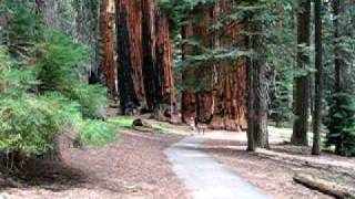 Cami on the Congress Trail in Sequoia National Park California