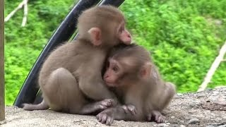 【SNOW MONKEY】 ニホンザル / 地獄谷野猿公苑 ☆Cute Baby Monkey☆ 1 year documentary vol.1