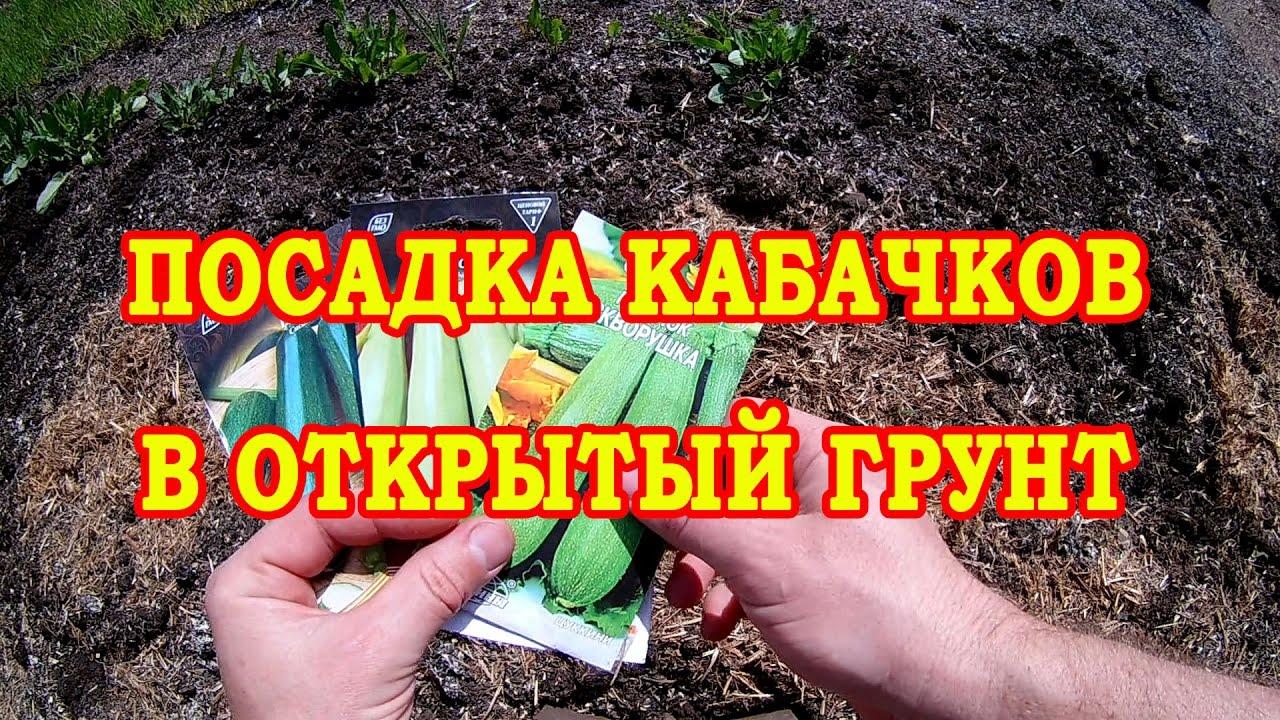 Выращивание кабачков в открытый грунт 122