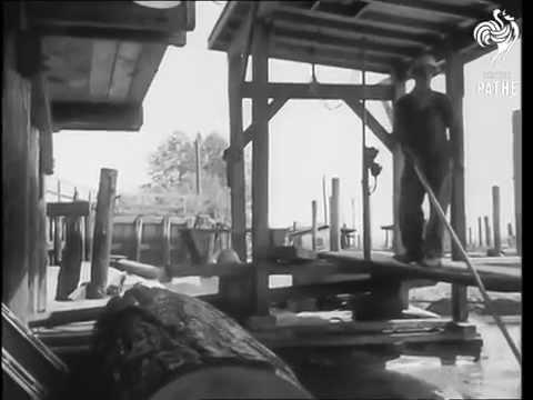 MacMillan Bloedel's Van Ply plywood division in 1958