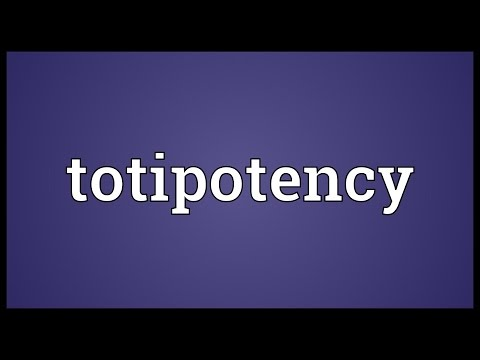 Header of totipotency