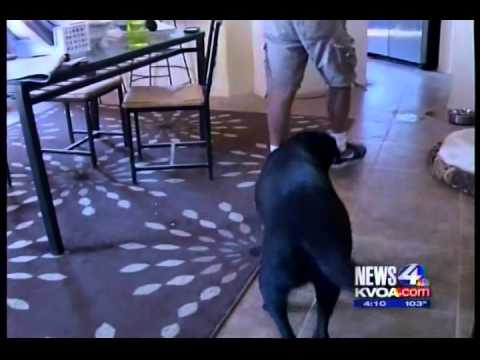 1 Monsoon in Tucson Dog Trainer Gerard Raneri discusses Dog Safety during Tucson Monsoon