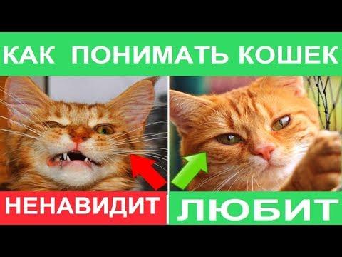 ЯЗЫК КОТОВ. Что хочет кошка и о чем думает. Как понять кота. Биософия кошек.