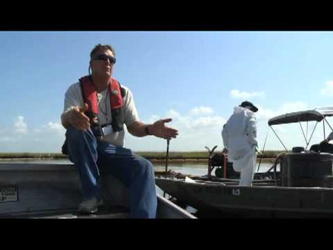 DRC Shaffer vacs suction oil in Plaquemines Parish marsh