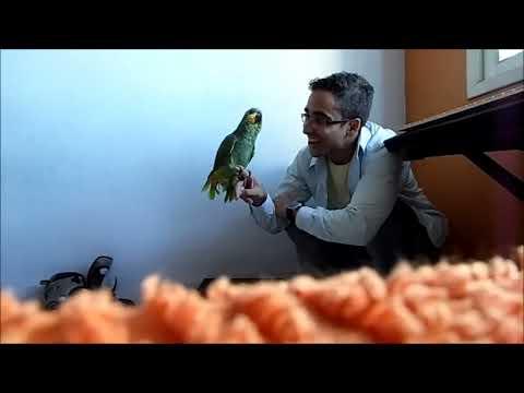 Adestramento de cães - Curso gratuito - Vídeo Aula 02 - Introdução - Com: Prof. Rafael Guarapa