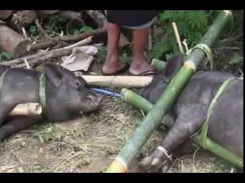 Rambu Solo - Funeral Ceremony - Tana Toraja - Indonesia