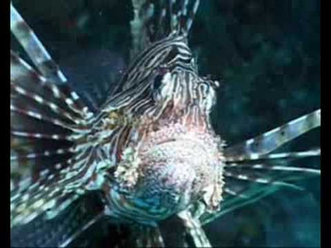Veligandu - Diving (3)