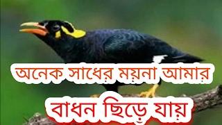 অনেক সাধের ময়না আমার - Live Video by S I Mintu