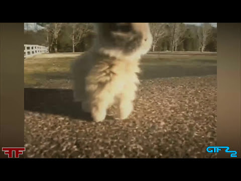GIFS WITH SOUND FAN FRIDAY #18 FUNNY GIFS WITH SOUND Compilation December 2014
