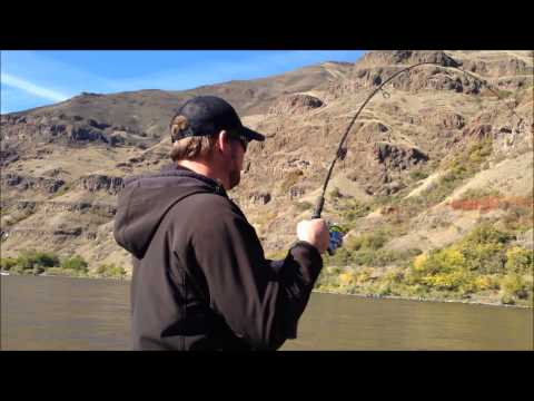 Snake River Steelhead Fishing Trip