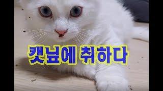 캣닢은 역시 고양이게는 마약이죠! 귀여운고양이동영상