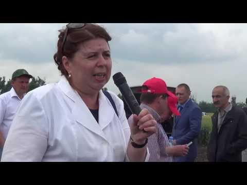 Сорта озимой мягкой пшеницы селекции КНИИСХ им. П.П. Лукьяненко