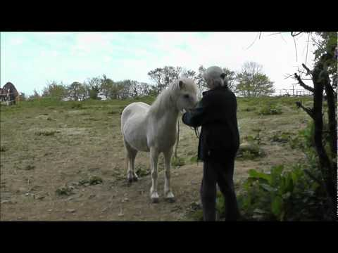 Mousey - SWEP rescue pony for rehoming