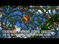 Stickerbush Symphony Restored to HD