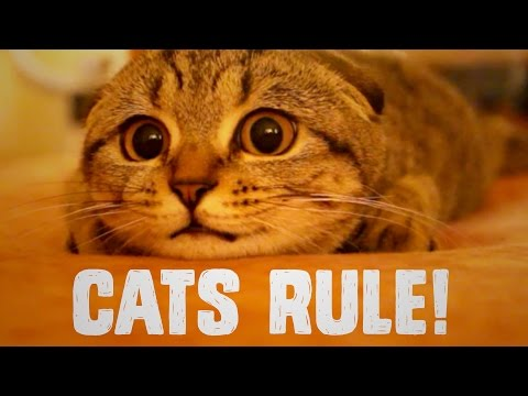 5 Reasons Why Cat People Rule So Hard