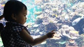 Jalan - Jalan ke Resorts World Sentosa Singapore | Part 2a - Sea Aquarium
