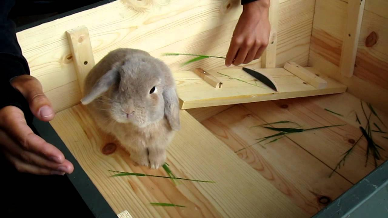 Home made bunny cage youtube for Homemade bunny houses