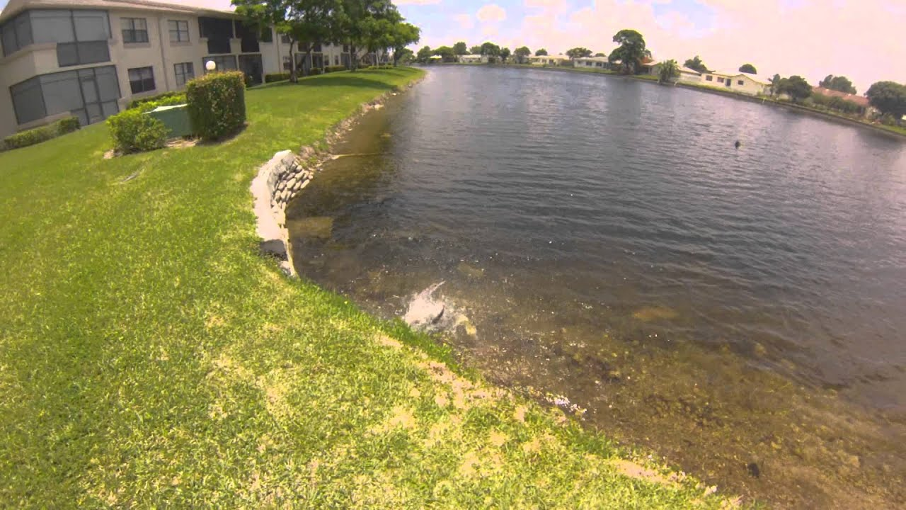 South florida exotic and native freshwater fishing youtube for Florida freshwater fishing license