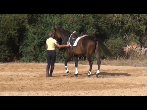 in hand work teaching the horse to accept the outside rein
