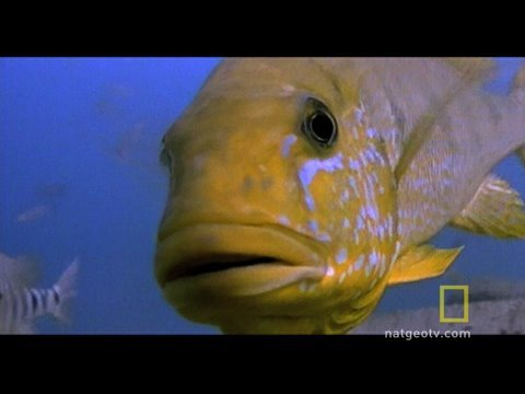 Fish vs. Turtle