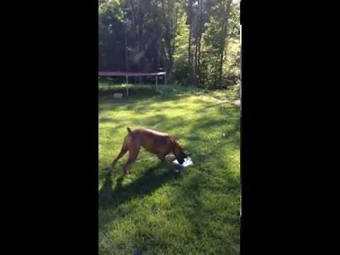 【面白グッズ】犬の水遊びに最適なスイッチ式噴水♪