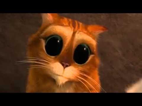 фото котика с большими глазами из шрека