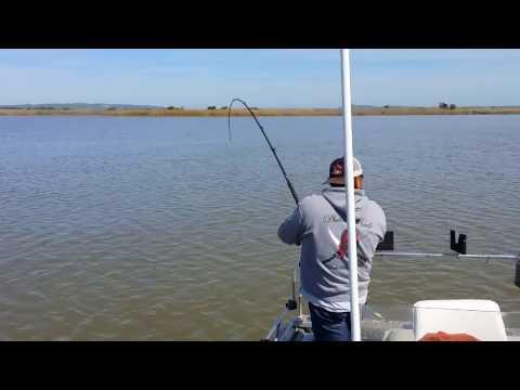 Sturgeon fishing Montezuma Slough 3/16/14