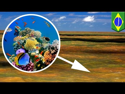 Amazing discoveries 2016: Massive coral reef found at Amazon River's mouth - TomoNews