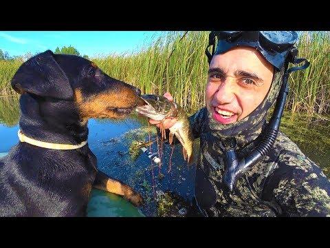Рыбалка! Подводная охота на болоте! Запекаю щуку в земляной печке!