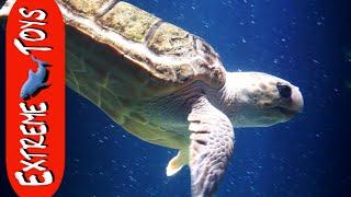 """The Sea Creature Adventure. """"Exploring Tide Pools, and the Aquarium"""""""