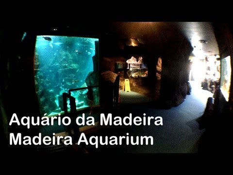 Aqurio da Madeira | Madeira Aquarium - Porto Moniz
