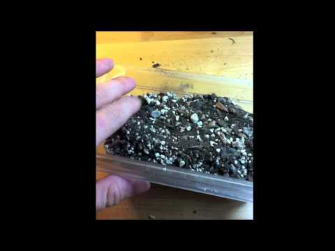 How To Grow Cactus From Seed &amp  Tips